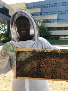 Kevin Patterson hive tour