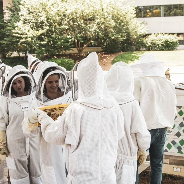 Bee Downtown Hive Tour