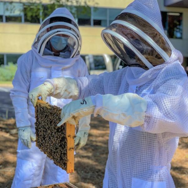 bee hive tour