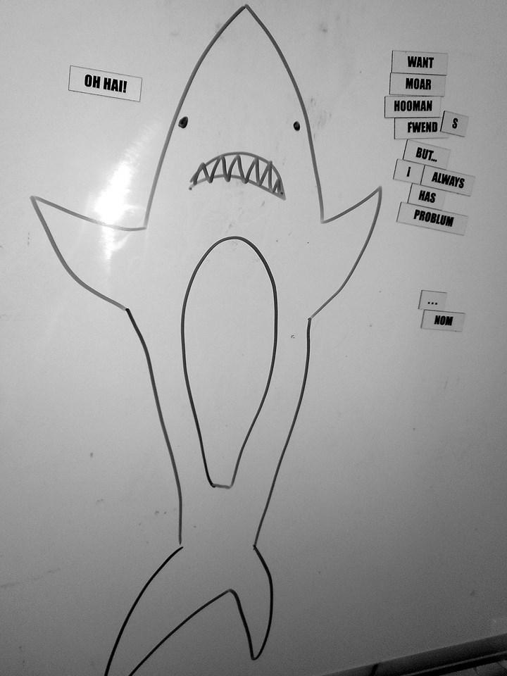 Sally's Shark